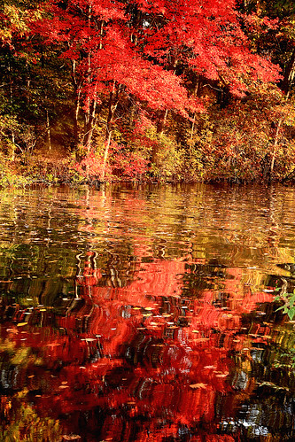Fall on the Pond as abstract, Saunderstown, Rhode Island by print57