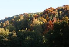 Leuchtender Laubwald