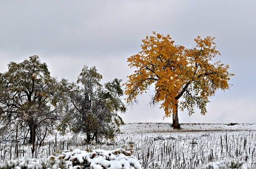 statepark autumn trees winter lake snow cold tree fall water clouds landscape colorado day cloudy denver foliage aurora co cherrycreekreservoir firstsnowoftheseason pammorris pamspics heavywetsnow nikond5000 october2012 pwwinter