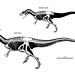 Small photo of Allosaurus