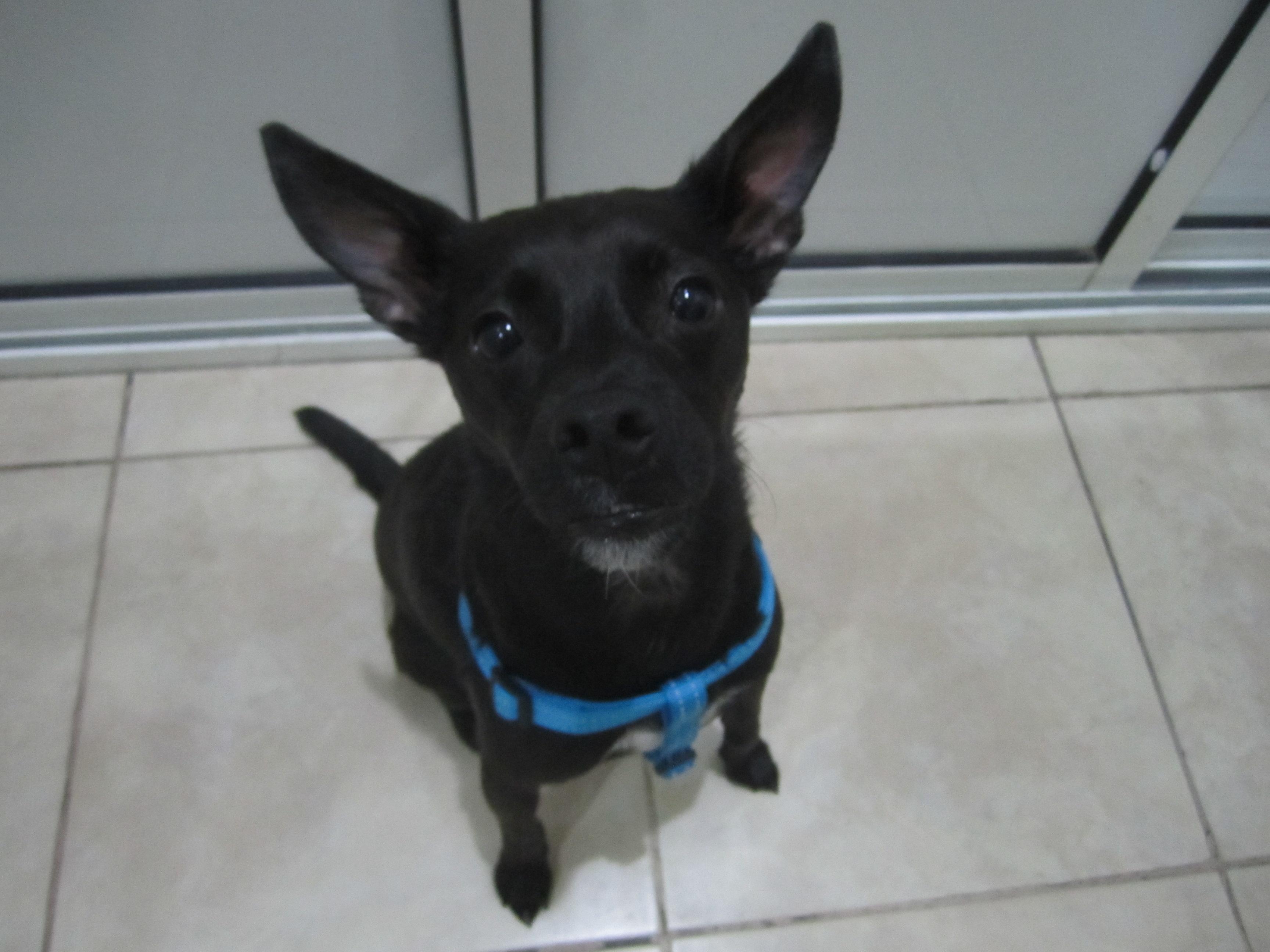 Hugo (4)