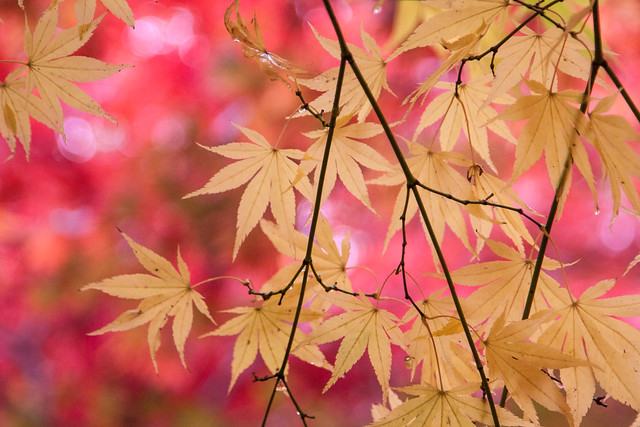 Bokehlicious autumn