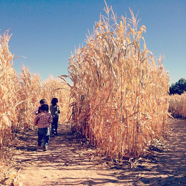 corn maze #latergram #wemadeitout