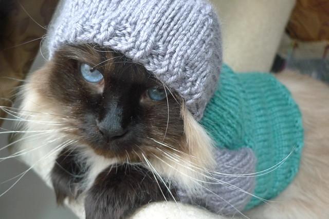 kitty hoodie