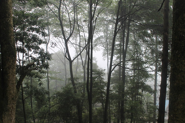 Monte Emei. China.a