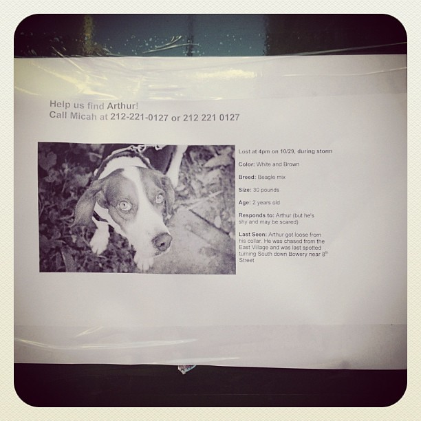 Dog still lost in #eastvillage after Sandy! Hope he gets home