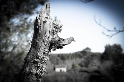Senderismo Fuenteheridos - Galaroza by ANAISANFOTOGRAFIA