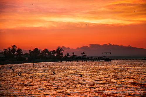 ocean sunset seascape bird beach peru silhouette landscape boat sundown scenic palmtree ica paracas bather provinceofpisco