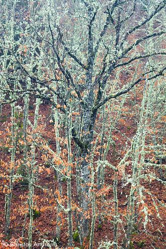 trees winter red brown white green nature leaves forest woodland season landscape scenery europe solitude quiet branches foliage greece treetrunk lichen birch epirus beautyinnature zagori