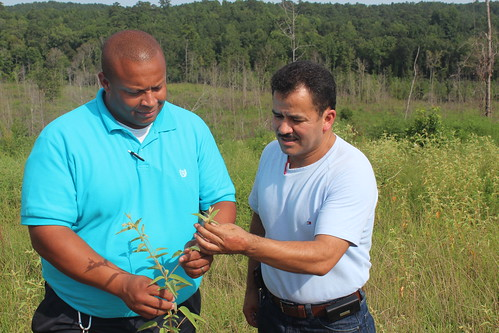 Variano Suarez (right) worked with NRCS Supervisory District Conservationist Kelvin Jackson and other staff members to plant native legumes on his land, providing food and shelter for dove and other wildlife.
