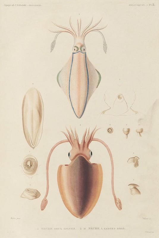 Voyage de la Corvette (atlas) by Jules Dumont d'Urville, 1833 a