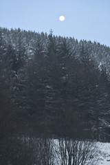 Snow Jan 24 2013