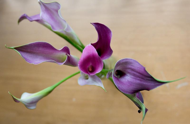 Florals-4