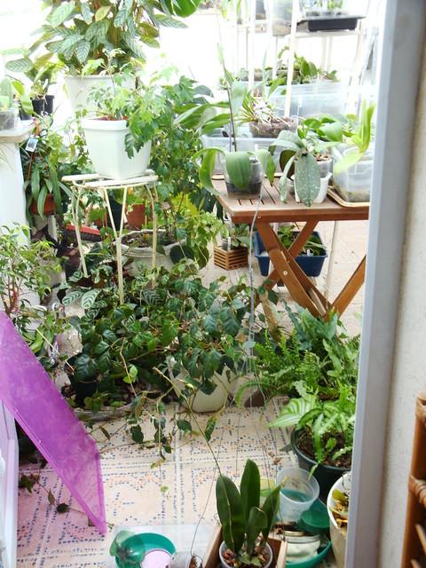 Dans mon Jardin d'Hiver 8430494226_6249bde43f_z