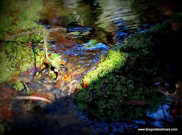 Spotlight on Fresh Water
