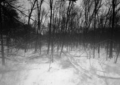 2013 Landscapes B&W