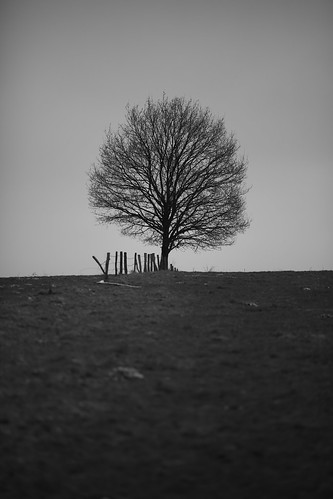The tree with a fence