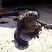 Galapagos_i7181