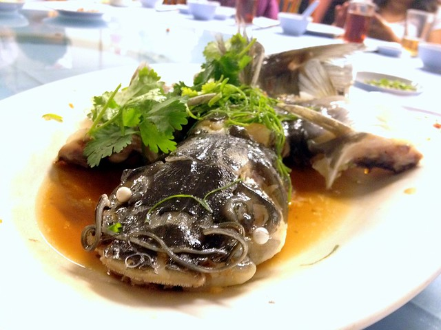 Steam River Patin Fish