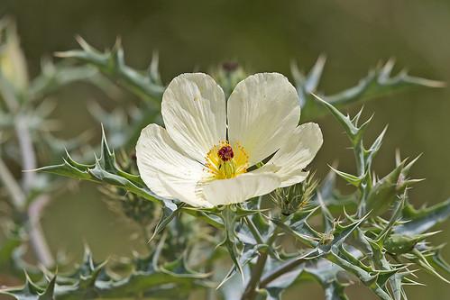 flowers beautiful nairobi nairobinationalpark nairobikenya awesomeblossoms canoneos5dmkiii macswildpixels