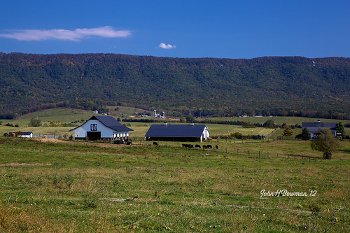 virginia october cattle barns blueskies shenandoahvalley tinroof 2012 largeanimals mountainviews canon24105l virginiamountains shenandoahcounty fencesgates october2012 virginiabarns