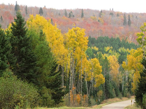A layer of green, yellow, and red leaves surround a road that winds past the birch and Sawtooth Mountains on the Superior National Forest. Photo: Steve Robertsen, District Interpreter, Tofte Ranger District of the Superior National Forest