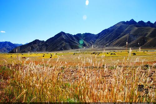 8102001647 c01eac96c6 藏梦●追寻诺亚方舟之旅:梦境日喀则   王佳冬个人博客