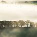 Misty Treeline by the milster