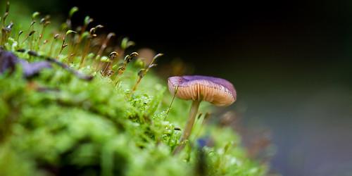 Komt amper boven mos-steeltjes uit by eosfoto