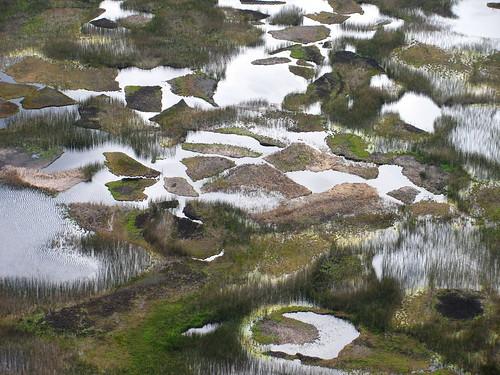 El fondo del cráter en Rano Kau