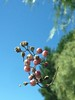 Photo Challenge: 289/366 Fallen Berries