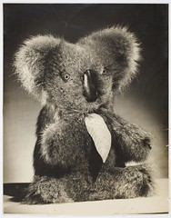 Aussie Bear toy koala, ca. 1944-1945 / photographed by Milton Kent and Noel Rubie