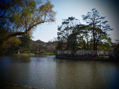 鶴岡八幡宮 源平池