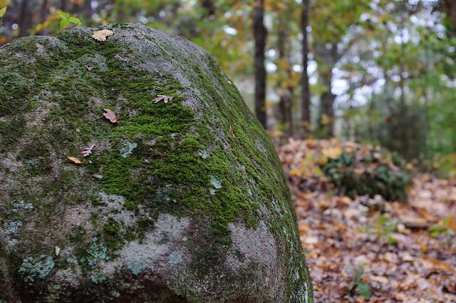 Mossy-Rock