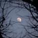 Com'è difficile parlare della luna! È così scema la luna. Dev'essere proprio il culo quello che ci fa sempre vedere.  Samuel Beckett, Molloy, 1951 by ChiaraJigsaw