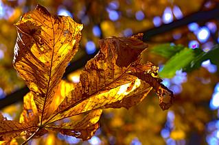 Herbst - Golden Light