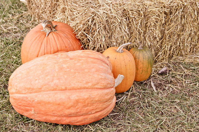 pumpkins_-3