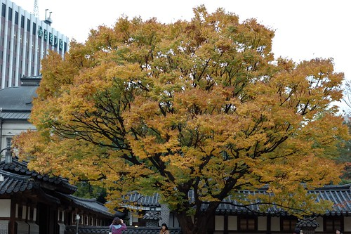 Yesterday's tree color in Woonhyungung, Seoul