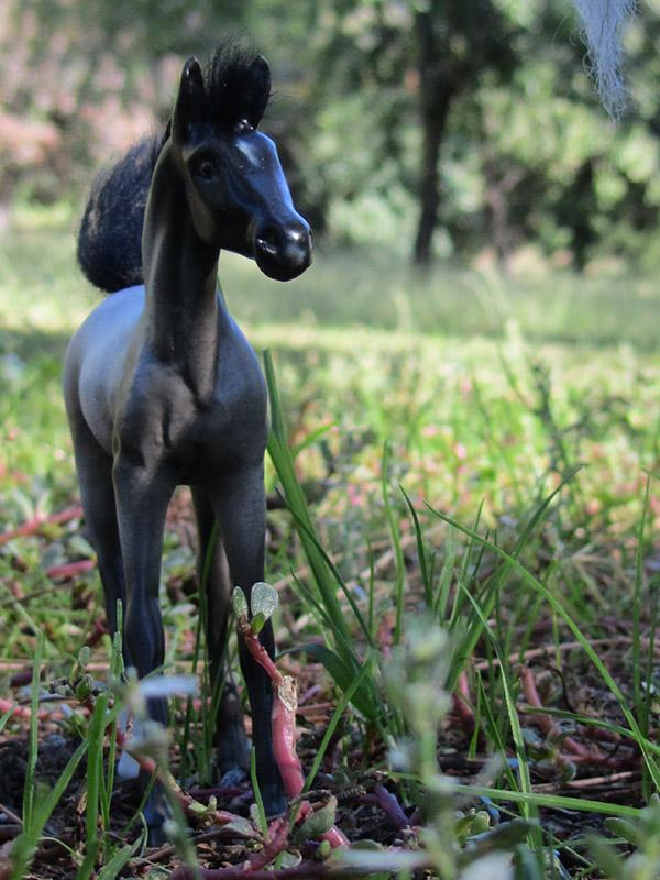 Timmy (Equorum Arab Foal)