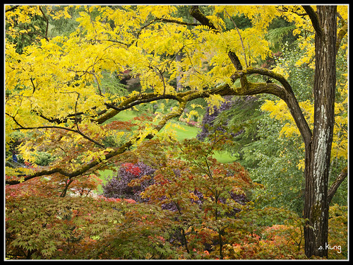 fall garden butchart sking5000