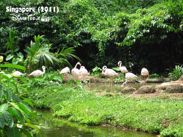 Day 3 Singapore - Zoo Singapore 07