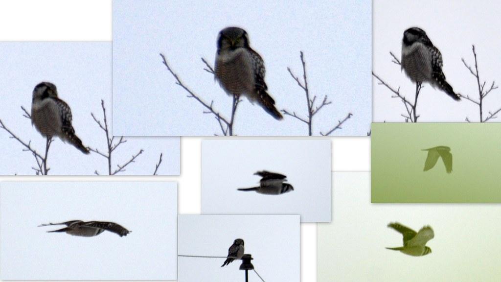 birds nef2