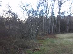 2013-01-12_16-57-08_565
