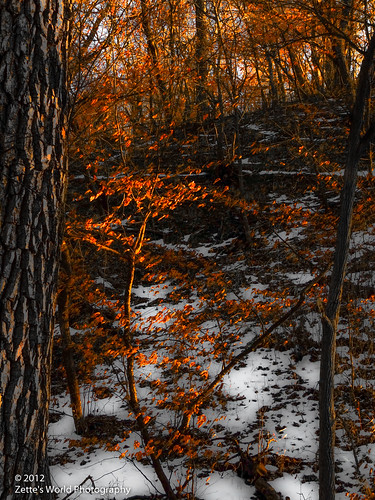 Winter Sunset, Stone State Park by ZetteG