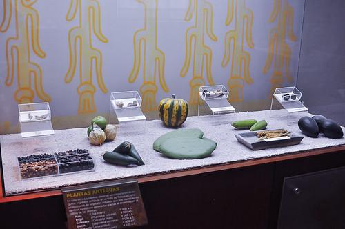 Museo del Valle de Tehuacán (16)