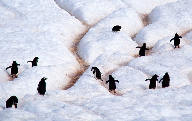 L'Austral : Danco Island (Antarctique)