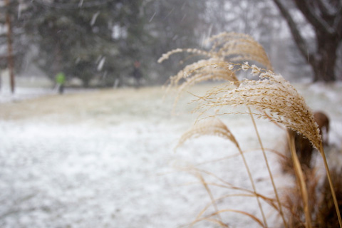 wintery2-0113