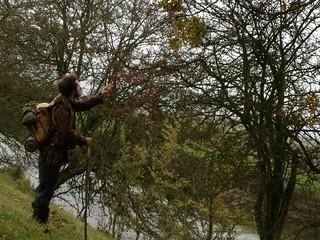 Ed hawthorn picking