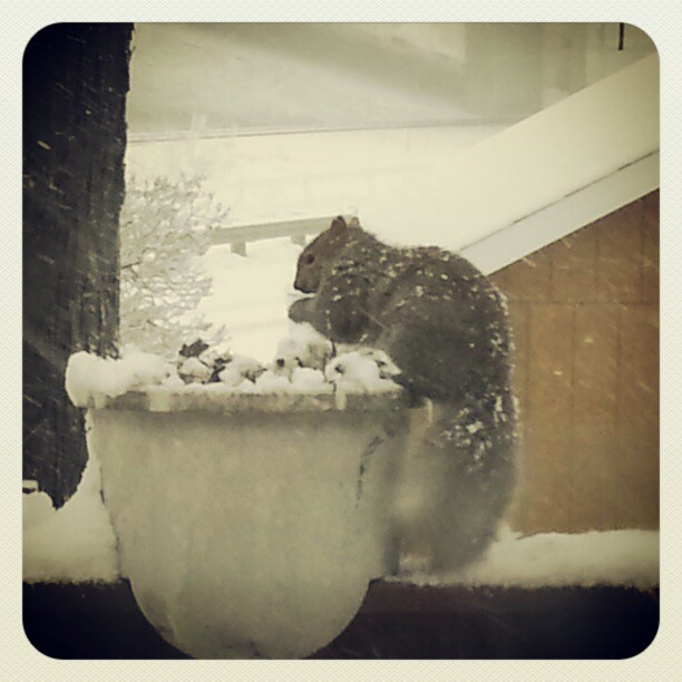 McFarland WI today.  View from kitchen window.  Squirrel.