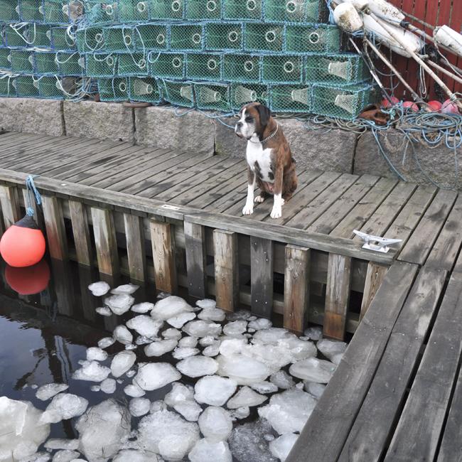 tiger i hamnen